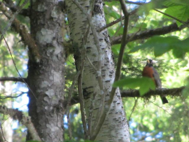 Squamish-Birding (1)