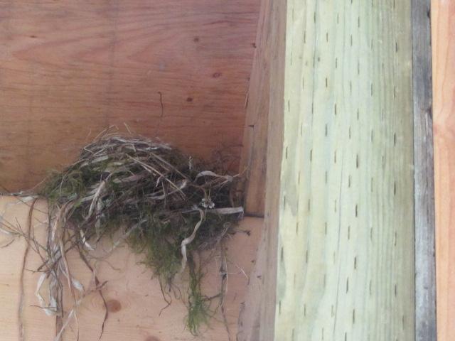 Squamish-Birding (3)