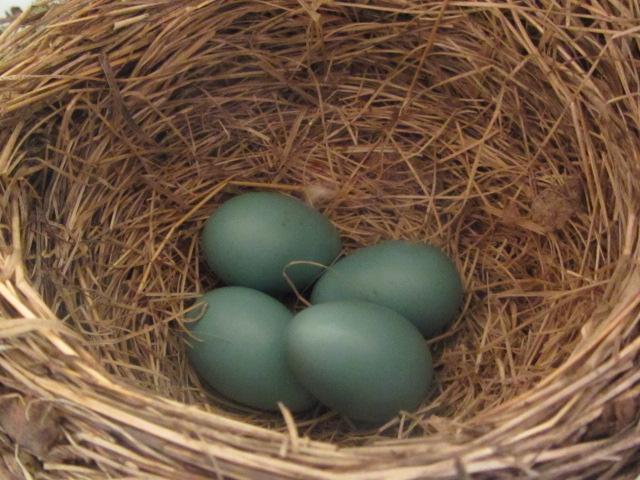Squamish-Birding (4)