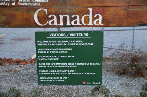 Squamish-Hatchery (1)