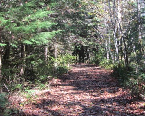 squamish-mountain-biking (5)