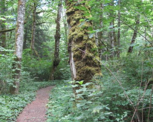 squamish-mountain-biking (6)